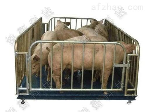 牲畜秤-牲畜秤电子牲畜秤