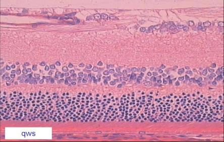组织切片免疫荧光步骤